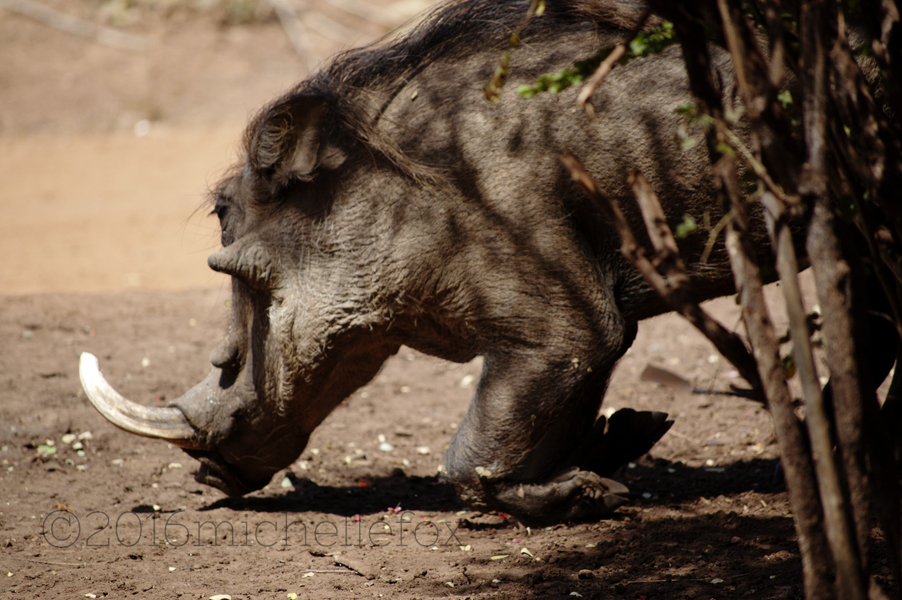 warthog-1_final-copy